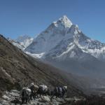 Nepal 20071027___6293